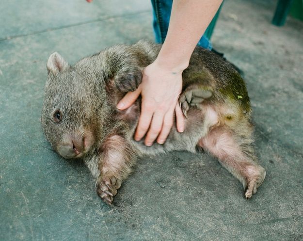 Top 5 Cutest Australian Animals That You Can Get Up & Close With On Your Roadtrip