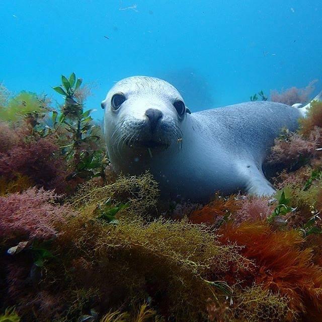 bairds-bay-sea-lions