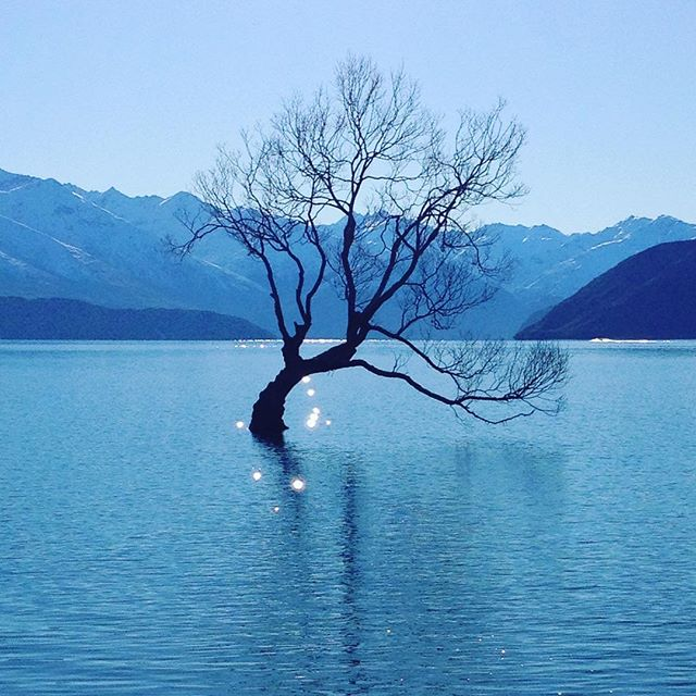 Lake Wanaka. Road Trip South Island New Zealand in Campervan