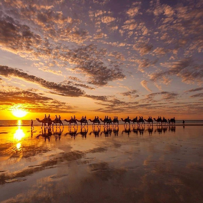 Image: Camel train at Cable Beach Instagram @paulmichael