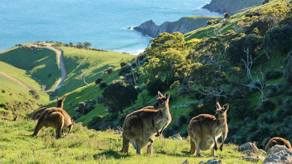 Camping Kangaroo Wildlife Australia