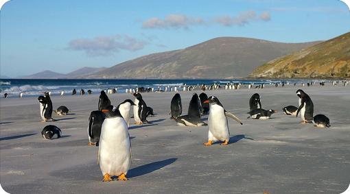 Penguin Spotting Australia