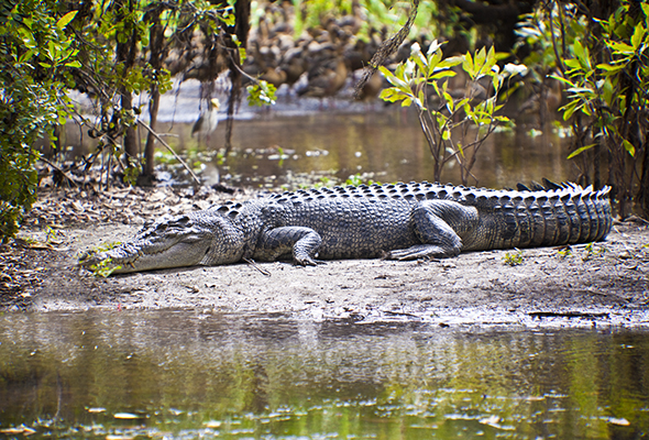 Northern Territory Australia