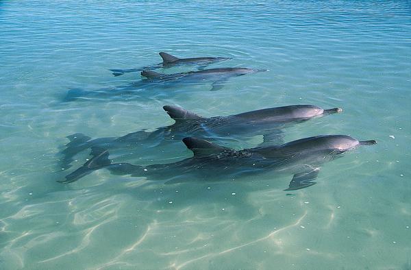 monkey mia dolphins in wa