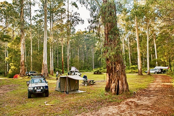 Ada River campground is situated on the outskirts of the Errinundra National Park.